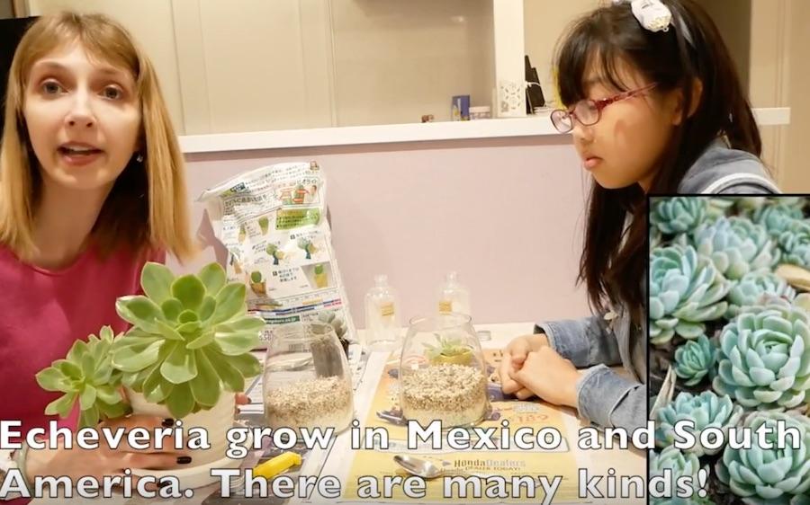 【子供向け英会話】テラリウムを作りました planting:  glass terrariums